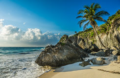 Caribbean beach with coconut palm, Tulum, Mexico Royalty Free Stock Photo