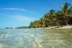 Caribbean beach with coconut trees and sea surface Royalty Free Stock Photos