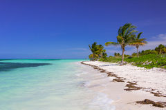 Caribbean beach in Cuba. Cayo Guillermo, with palms royalty free stock image