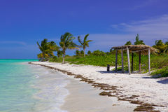 Caribbean beach in Cuba. Cayo Guillermo, with palms stock image