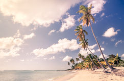 Caribbean beach in Dominican Republic Stock Images