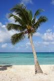 Caribbean Beach, Dominican Republic Royalty Free Stock Photography
