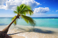 Caribbean beach landscape Stock Photos