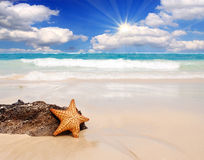 Caribbean beach and large starfish. Stock Photos