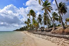 Caribbean beach with a lot of palms Royalty Free Stock Photos