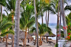 Caribbean beach with a lot of palms and white sand Royalty Free Stock Photography