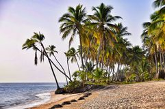 Caribbean beach with a lot of palms and white sand Stock Photos