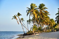 Caribbean beach with a lot of palms and white sand Stock Photo