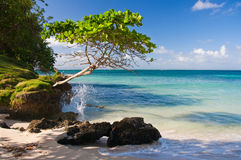 Caribbean Beach at a Luxury Resort. Beach near Samana, Dominican Republic Royalty Free Stock Image