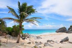 Caribbean Beach, Mexico. Caribbean beach on the shore of Tulum, Mexico Royalty Free Stock Image
