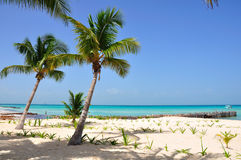 Caribbean Beach, Mexico Royalty Free Stock Images