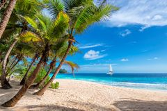 Caribbean beach with palm and a sailing boat in the turquoise sea. Beautiful sandy beach with palm and a sailing boat in the turquoise sea on Jamaica Paradise royalty free stock photography