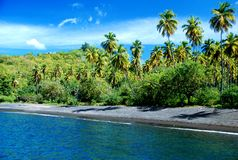 Caribbean beach with palm tree. St. Vincent Royalty Free Stock Photo