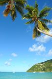Caribbean beach with palm tree. In Tortola Royalty Free Stock Photo