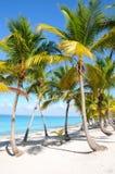 Caribbean beach with palm tree. In Dominancia Republic, La Romana, Isla Catalina Stock Photo