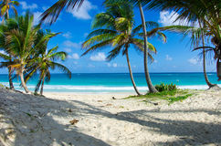 Caribbean Beach royalty free stock images