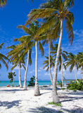 Caribbean beach with palm trees. Caribbean beach with white sand blue sky and many palm trees Stock Photo