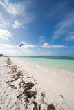 Caribbean Beach. With palm trees amd sunbeds Stock Photography