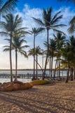 Caribbean Beach. With palm trees amd sunbeds Royalty Free Stock Photos
