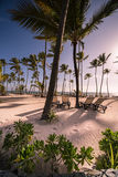 Caribbean Beach. With palm trees amd sunbeds Stock Images