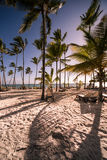 Caribbean Beach. With palm trees amd sunbeds Royalty Free Stock Image