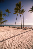 Caribbean Beach. With palm trees amd sunbeds Stock Image