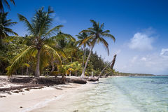 Caribbean Beach. With palm trees amd sunbeds Royalty Free Stock Photography