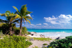 Caribbean beach with palm trees Royalty Free Stock Photos
