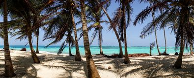Caribbean Beach with Palm Trees on the San Blas Islands between Panama and Colombia.  Stock Photos