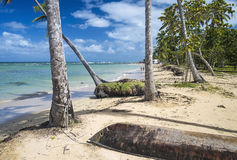 Caribbean beach with palm trees Royalty Free Stock Images