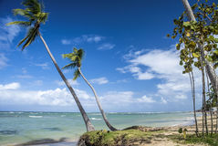 Caribbean beach with palm trees. Tropical beach with palm trees in Dominican Republic Stock Image