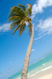 Caribbean beach with palm and white sand Stock Photography