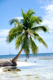 Caribbean beach with palm and white sand. With the coast in the background Royalty Free Stock Photos