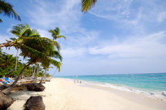 Caribbean beach with palm and white sand Royalty Free Stock Photo