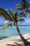 Caribbean beach. Picture. Saona Island Royalty Free Stock Photo
