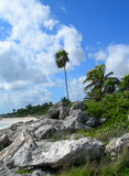 Caribbean beach at the Riviera Maya, Cancun, Mexico. Caribbean beach with tropical vegetation, limestone rocks, palm trees and lush green foliage at a resort in stock photography