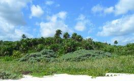 Caribbean beach at the Riviera Maya, Cancun, Mexico. Caribbean beach with tropical vegetation, palm trees and lush green foliage at a resort in Riviera Maya royalty free stock image