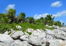 Caribbean beach at the Riviera Maya, Cancun, Mexico Royalty Free Stock Images