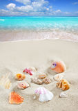 Caribbean beach sand shells tropical Stock Image