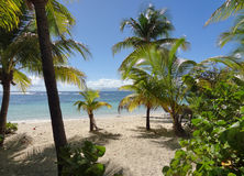 Caribbean beach scenery Stock Photos