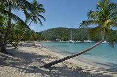 Caribbean beach with sloping Palms and Boat royalty free stock image