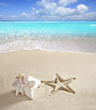 Caribbean beach starfish print shell white sand Stock Photo