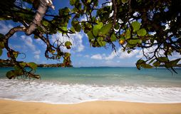 A Caribbean Beach. In a sunny day royalty free stock images
