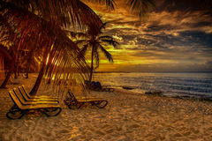 Caribbean beach sunset. Caribbean beach with palm at sunset Stock Photography