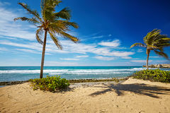 Caribbean beach and tropical sea in Haiti. Summer Caribbean beach and tropical sea in Haiti Royalty Free Stock Image