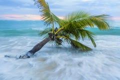 Caribbean beach. Stock Photo