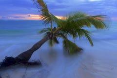 Caribbean beach. Stock Photos