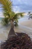 Caribbean beach. Royalty Free Stock Photography