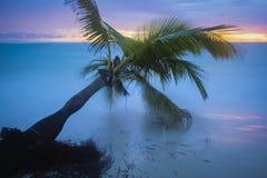 Caribbean beach. Stock Photography