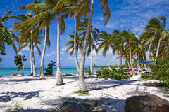 Caribbean beach with white sand. Beautiful caribbean beach with white sand many palmtrees and few people Royalty Free Stock Photography